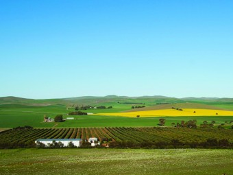 Australia's New Organic Superfood: Carob