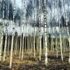 Original Organic Birch Waters