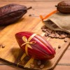 Edible Cocoa Pod Chocolate Box