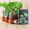 5 Wasabi Plants
