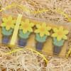 Spring Daffodil Chocs