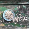Tiger Nut Flakes - Organic