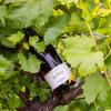 Pinot Noir from Bolney Wine Estate