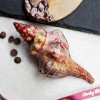Realistic Vegan Dark Chocolate Seashell