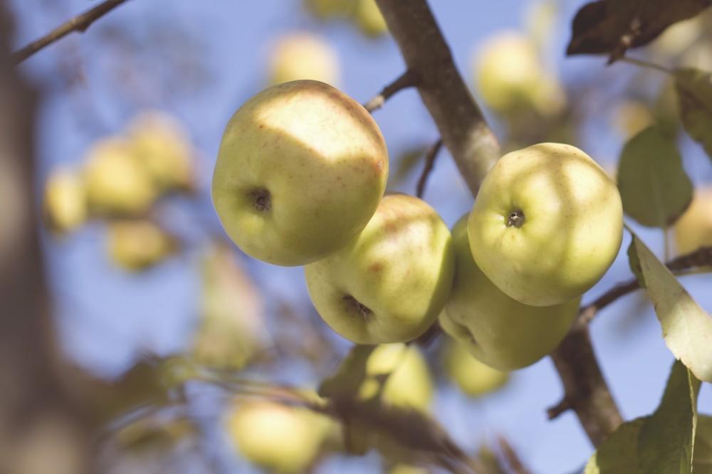 The Ultimate Dancing Juice: Apple Cider Vinegar
