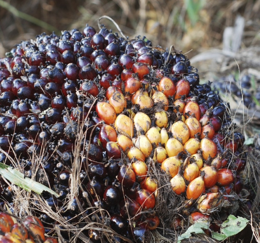 Palm Oil: What's The Deal?