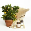 Extra Orange Crate - Fruit Tree Gift Set