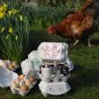 Demijohn Egg Box of Delights - Gin Gift Set