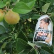 Holly GoLightly 0.5% ABV Low Alcohol Cider (24 x 330ml cans)
