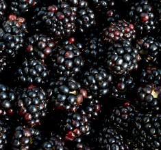 How to Pick Blackberries: Foraging Top Tips