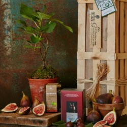 Extra Fig Crate - Fruit Tree Gift Set