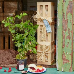 The Loganberry Lover's Crate - Fruit Tree Gift