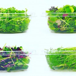 Fresh Microgreens & Herbs Subscription - Delivered Monthly for a Whole Year!