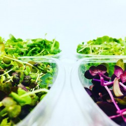 Microgreens, Microherbs & Leafy Greens Sampling Tray (16 Varieties)