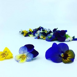 Edible Viola Flowers - Mixed