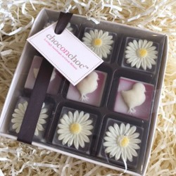Chocolate Chicks And Daisies