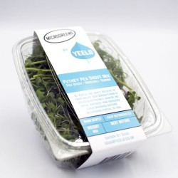 Putney Pea Shoot Microgreens Mix