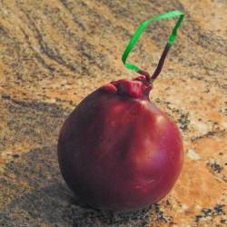 Lancashire Bomb Red Onion 230g