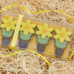 Chocolate Daffodils Gift Pack