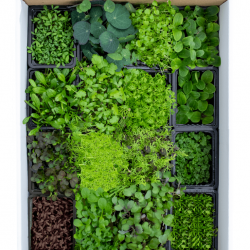 LIVE Herbs and Microgreens Box - 16 Selection