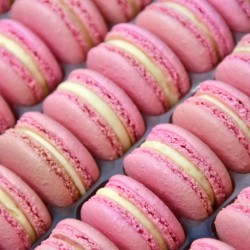 Rose Macarons in Bulk (Tray of 24)