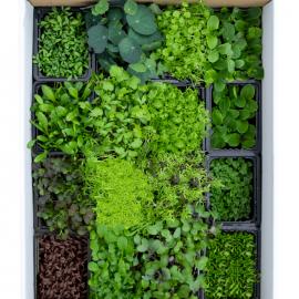 Fresh, sustainable, live!