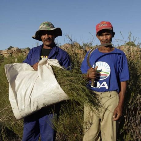Wild Rooibos Farmers
