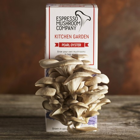 Pearl Oyster Grow your own mushroom kit Kitchen Garden