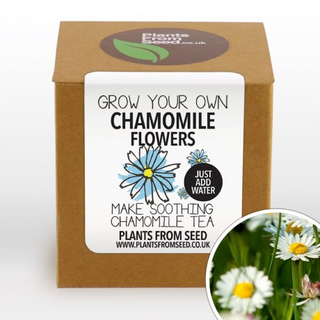 Grow Your Own Tea Plant Kit