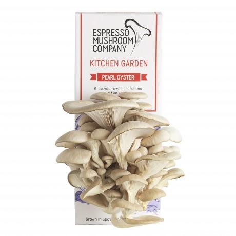 DIY Mushroom Growing Kit - Pearl Oyster