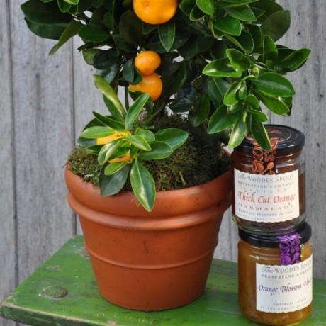 Extra Orange Crate - Fruit Tree Gift Set