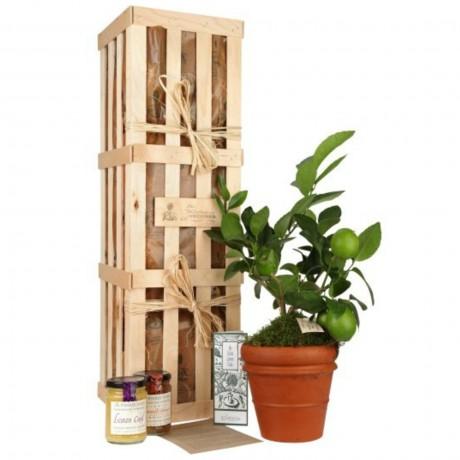 Extra Lemon Crate - Fruit Tree Gift Set