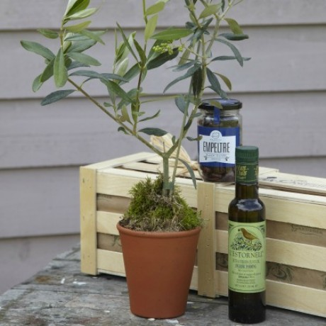 Extra Olive Enthusiasts Kit - Olive Tree Gift