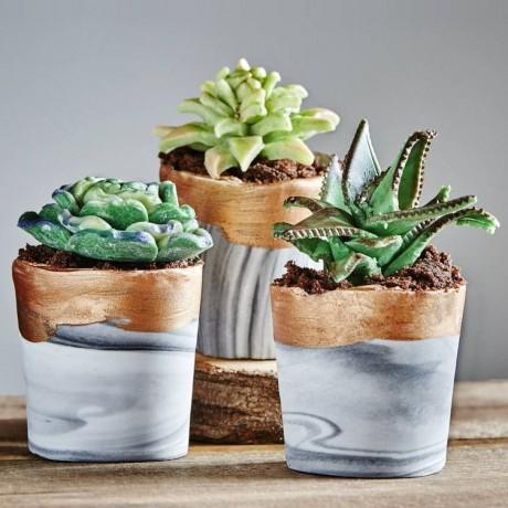 Trio Of Edible Succulent Cakes