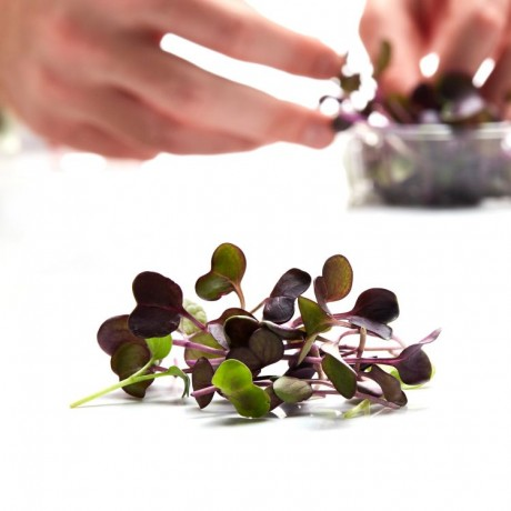 Seasonal Microgreens Subscription Box