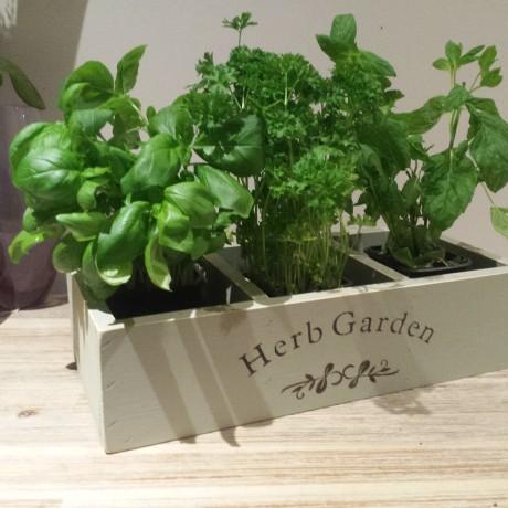 Window box Herb planter