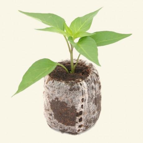 Chilli Growing Kit
