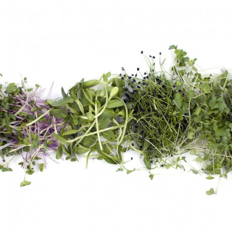 Microgreen Mixes Selection Pack