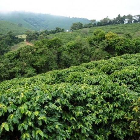 Brazil Fazenda Santa Ines Speciality Coffee