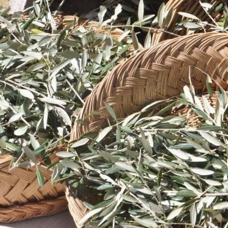 Organic Olive Leaf Tea with Organic Pomegranate - 2 pack